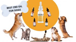 Discover Something New From Cbd Oil For Pets Recently? We Requested, You Responded To!